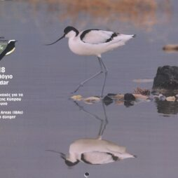 Πτηνολογικός Σύνδεσμος Κύπρου Ημερολόγιο 2018 BirdLife Cyprus 2018